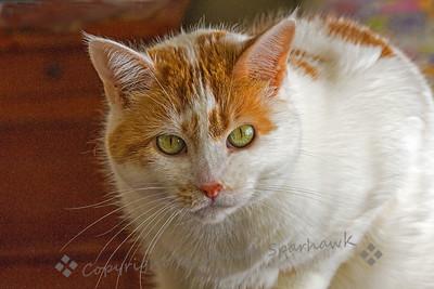 Trixie Portrait