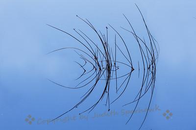 Grasses in the Marsh