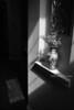 Vase in Light