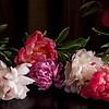 5 pink peonies