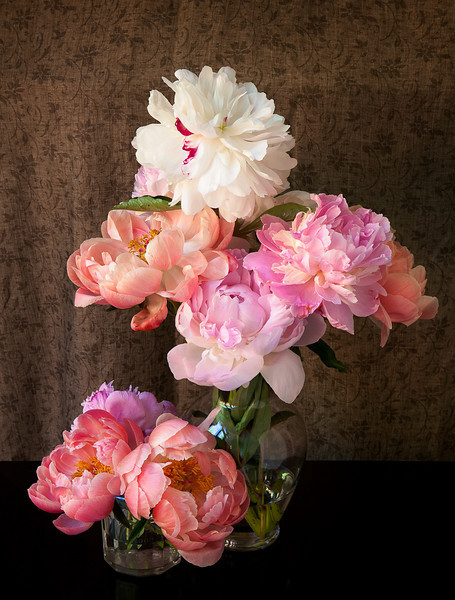 coral peonies in glass