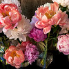 wild bunch of peonies