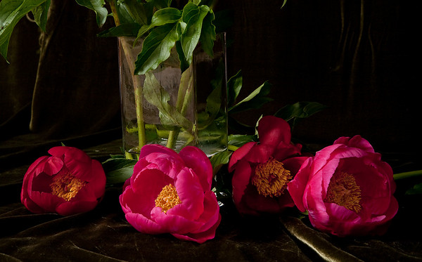 Peonies in row