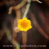 AZ_Flower_2O7A1446