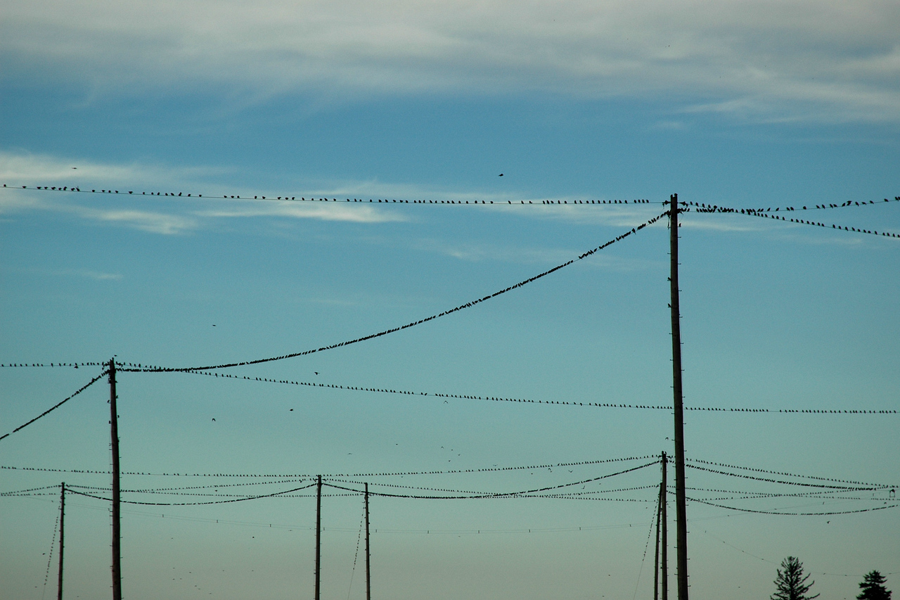 A whole lot of birds
