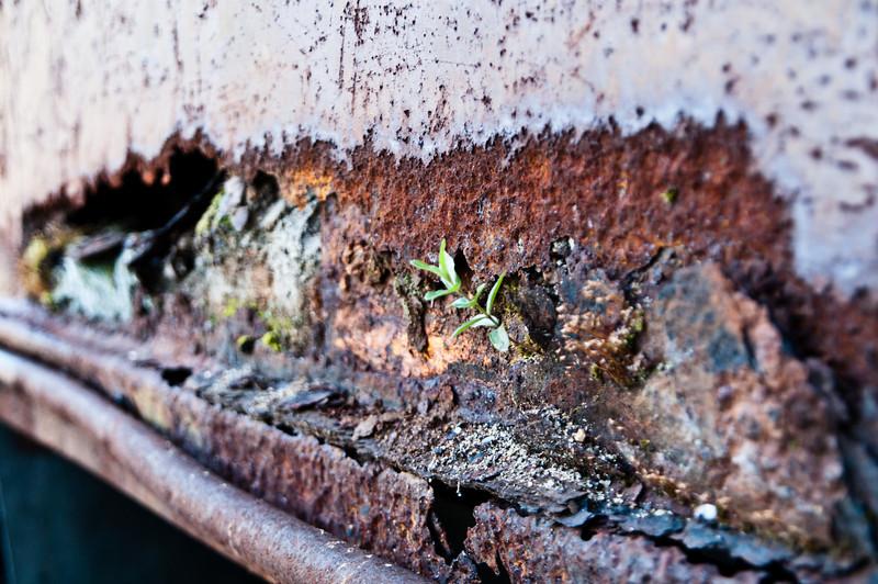 Dump truck ecology