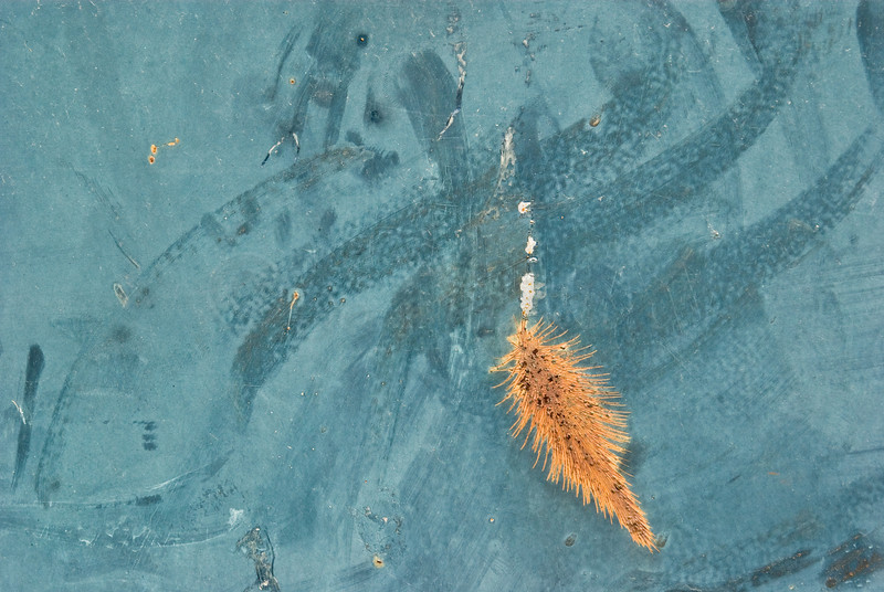 Another abstract 'Painting'.!<br /> <br /> Rusty gash on Blue Dumpster