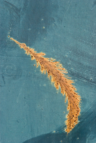 Abstract Feather! Take II<br /> <br /> Rusty gash on Blue Dumpster
