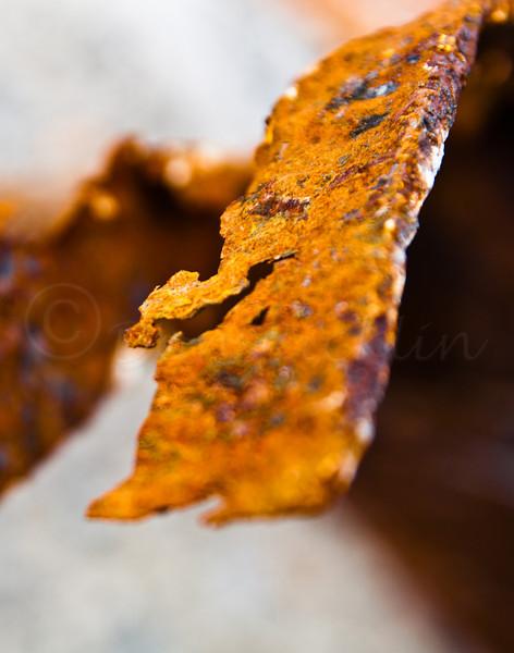 Rust 7 Detail I