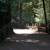 A look at the mile long trail through the redwood grove.