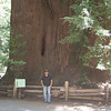 Shuvadeep in front of a group of coastal redwoods in Henry Cowell Redwoods State Park in the Santa Cruz Mountains.
