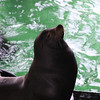 A sea lion under the wharf.