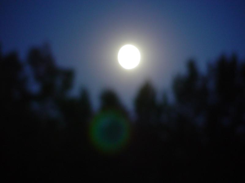 Full moon shining down between the tall pinetrees in Cornucopia, WI.
