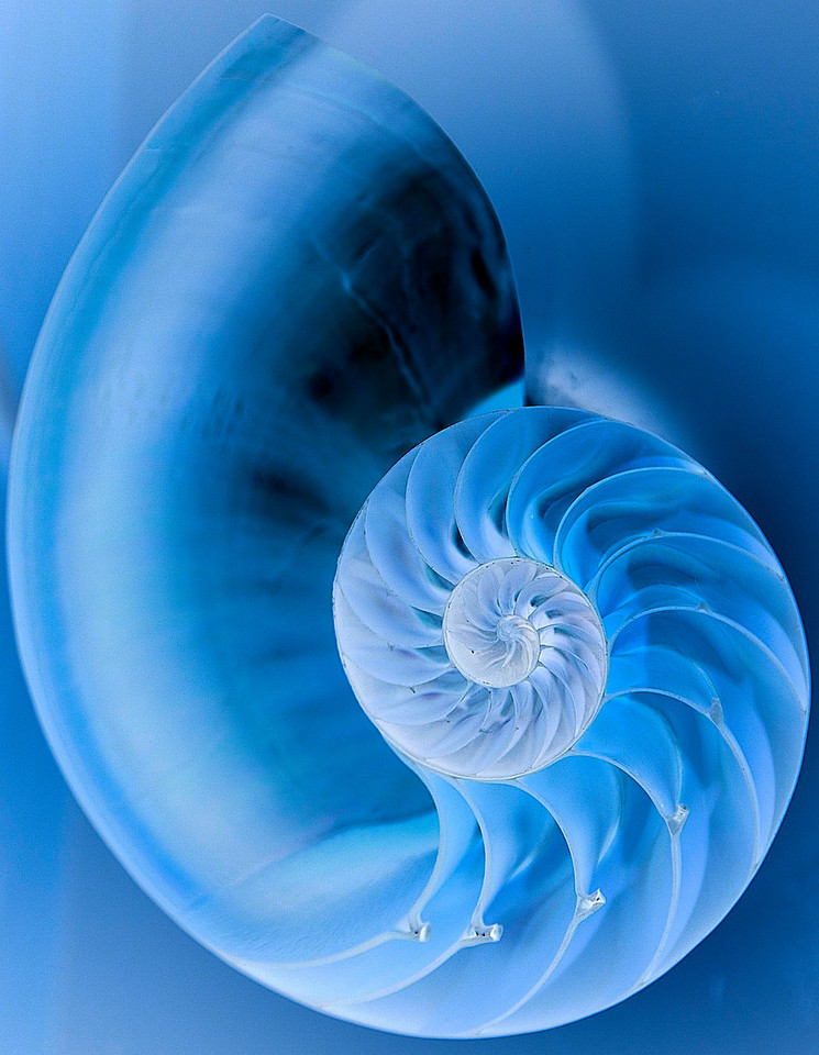 Inverted Nautilus Shell