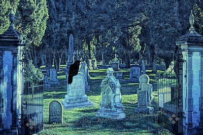 Raven in the Graveyard