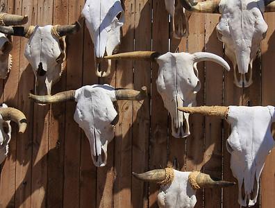 Steer skulls (Horizontal) (15)