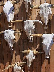 Steer skulls (Vertical) (16)