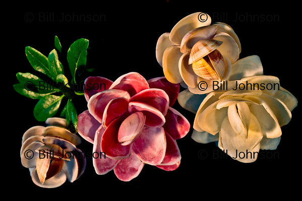 Beautiful flowers made out of shells