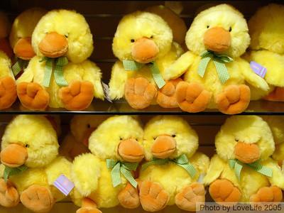 Chicks 4 Sale