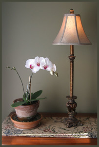 SL-V-0004  Potted Orchid