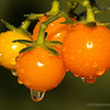 sun gold cherry tomatoes...<br /> <br /> These are sooo sweet!<br /> <br /> August 20, 2012