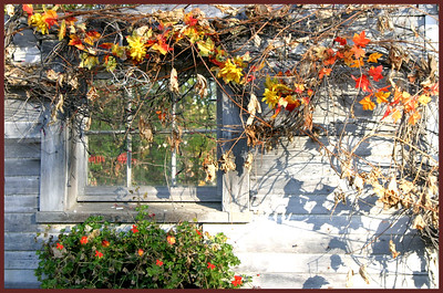 SL-H-0010-23 Autumn's Window