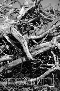 Gnarly - Driftwood on the bank of the Missouri River in Lafayette County, Missouri at Lexington.