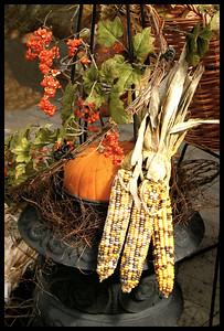 SL-V-0018 Harvest Corn