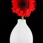 Flower night 14-4-2012 (IMG_7453) 4k
