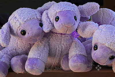 Lavender Lambs ~ These adorable lambs were in a booth at the Lavender Festival.  I couldn't resist taking a few shots of them.