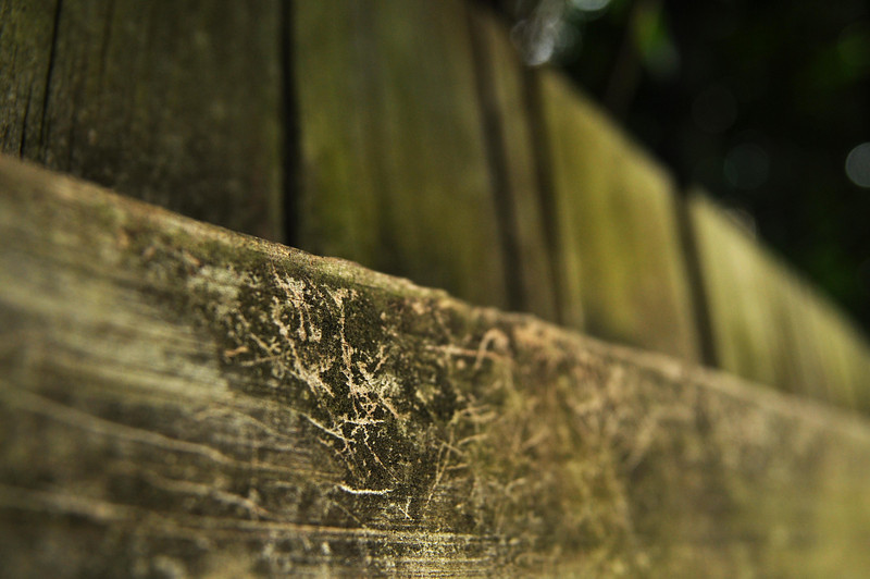 muted color assignment - a fence in a shaded backyard with some interesting detail in shallow focus