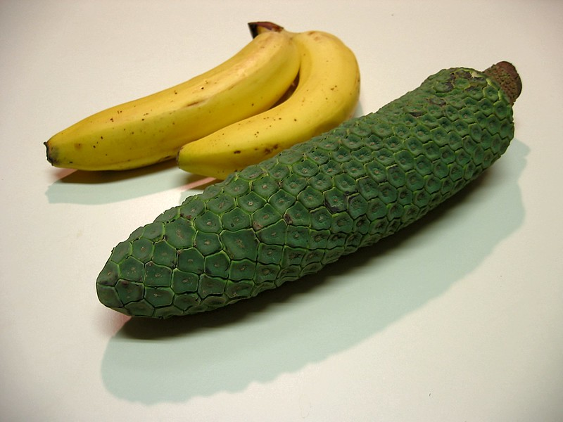 Monstera Deliciosa almost ready to eat with two bananas