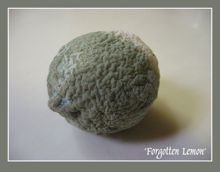 'Forgotten Lemon' - moldy lemon [borders, text]