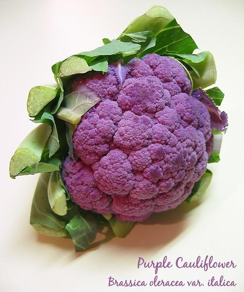 00aFavorite Purple Cauliflower (actually a broccoli) Brassica oleracea var italica cl [text]