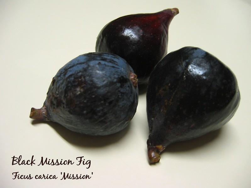 Black Mission Figs - trio [text]