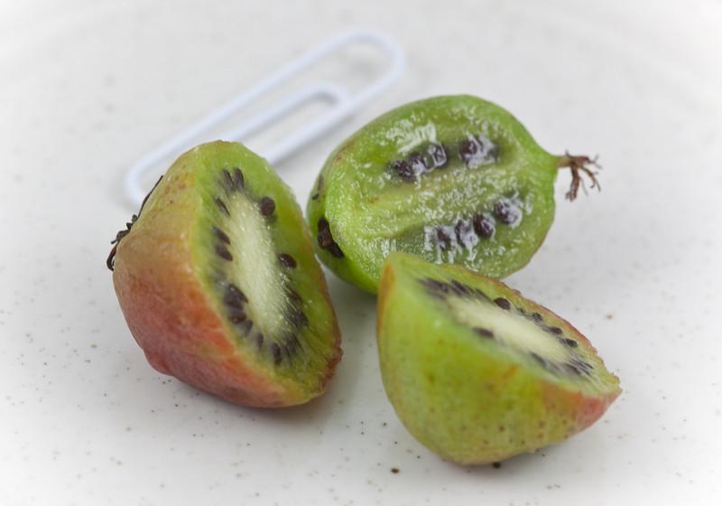 Kiwi Berry (Actinidia arguta, hardy kiwi - unrelated to kiwi fruit)-2