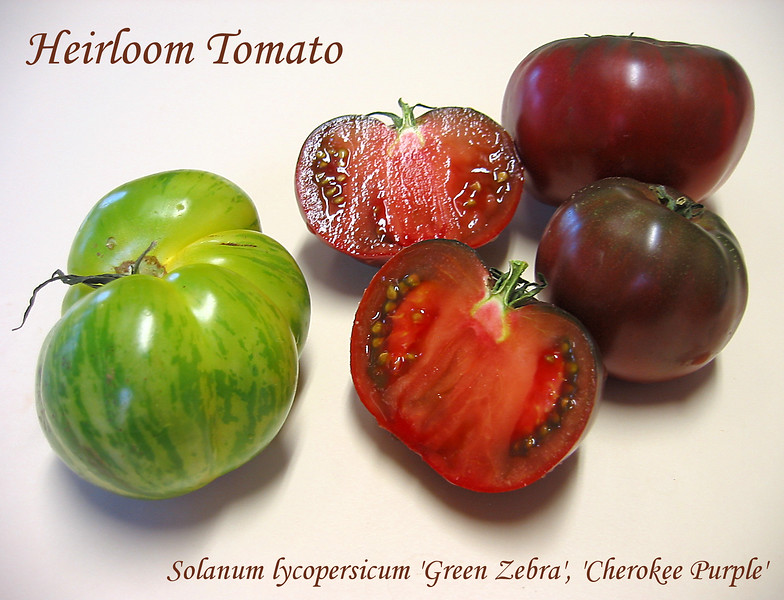 Heirloom tomato - halved Green Zebra and (2 intact) Cherokee Purple [text]
