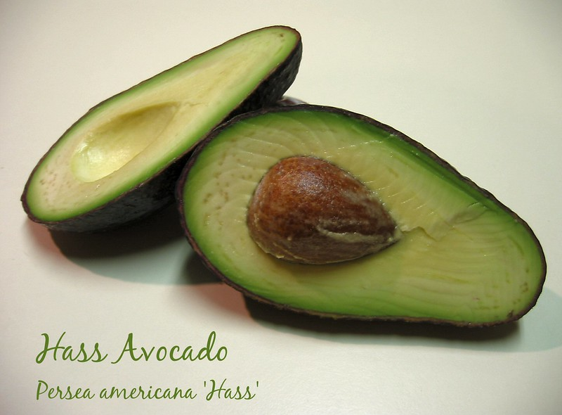 Hass Avocado [text] (1st image edited with PSP 8 trial)