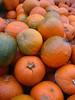 Pumpkins (at Wellspring Chapel Hill)