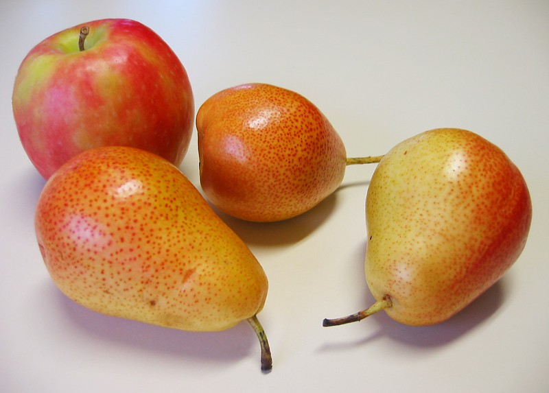 Forelle pears with a Pink Lady apple for perspective - pears approx 3in long 2in at widest