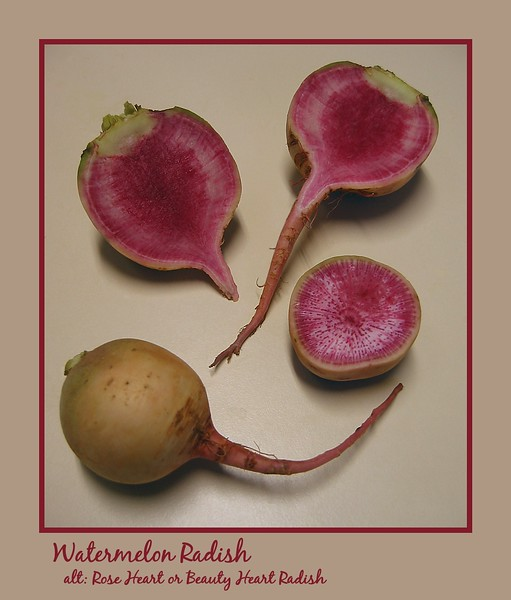 00aFavorite Watermelon Radish (portrait) whole and cut in both dimensions [borders, text]