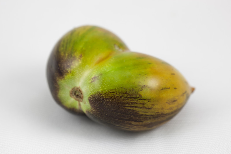 00aFavorite 20180801 Brad's Atomic Grape Tomato (purch WeaverStMkt, Chapel Hill, NC) (image 1 of 9)