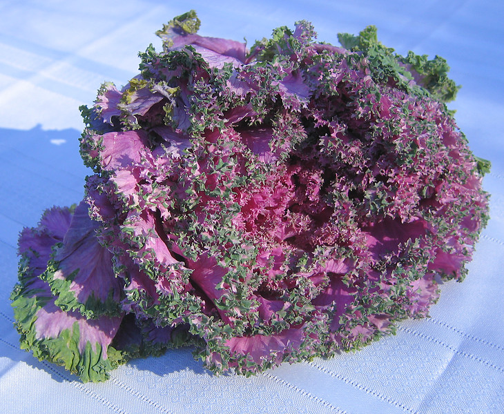 Ornamental kale (Brassica oleracea var  acephala)