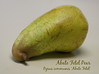 Abate Fetel pear [text]