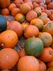 Pumpkins 3 (Wellspring Chapel Hill)