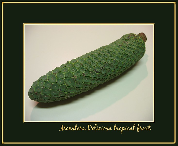 Monstera Deliciosa 2 [borders, text]