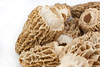 00aFavorite Morel Mushrooms (20100421)