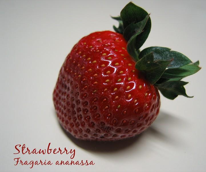 Strawberry [text]