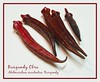 Burgundy okra 2 - several spears [text, borders]