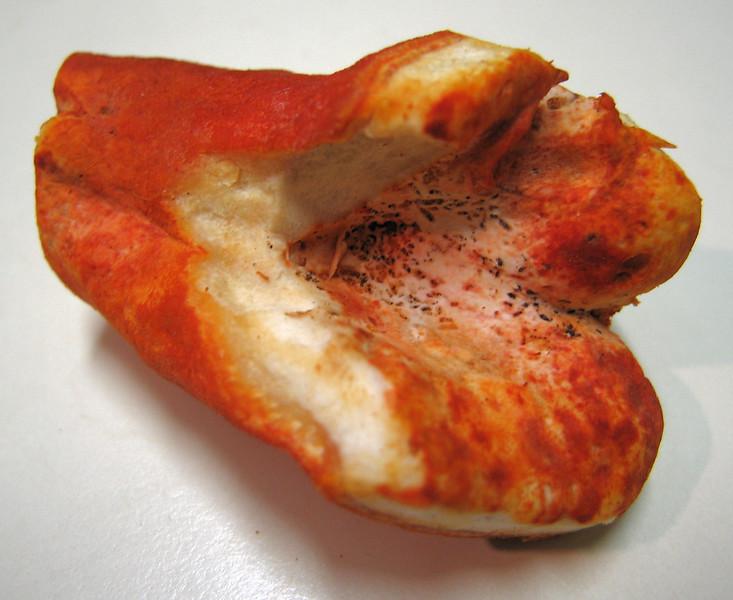 00aFavorite Lobster mushroom cl